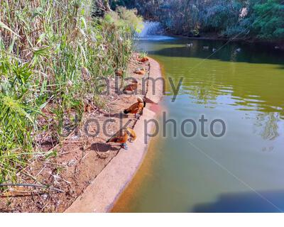 a group of birds standing beside the pond - Stock Photo