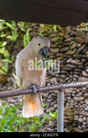Parrot at the garden