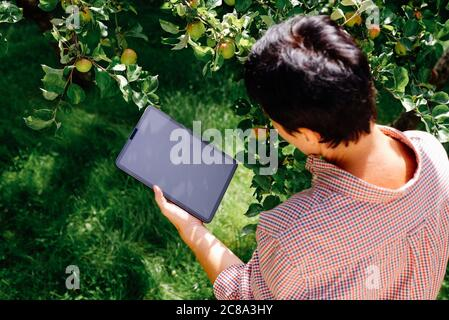 Farmer using digital tablet pc in orchard, inspecting apple tree fruits. Innovative agriculture technology concept