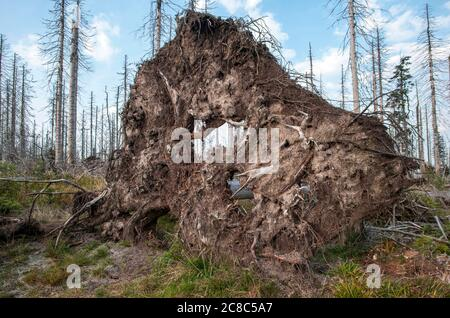 Bavarian - Germany, 1. August 2015: The Bavarian Forest National Park is a national park in the rear Bavarian Forest directly on the border with the C - Stock Photo