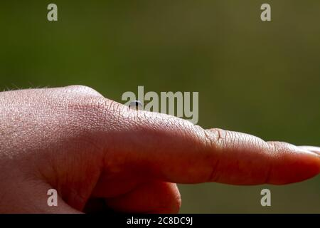 An abstract isolated close up image showing a man's hand in a pointing gesture while a harmless tiny black beetle is walking on his index finger towar - Stock Photo