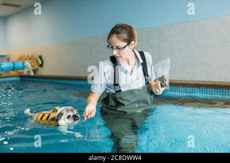 Female physiotherapist feeding pug dog in swimming pool - Stock Photo