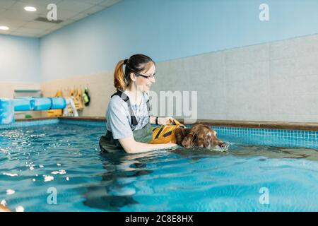 Female physiotherapist assisting Labrador Retriever in swimming pool - Stock Photo