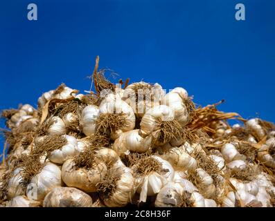 Stacked White Garlic at the Market. A large stacked display of garlic bulbs at the  Farmers' Market in Coustelet, France - Stock Photo