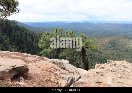 A lone Ponderosa Pine Tree growing along the edge of the Mogollon Rim in Northern Arizona.