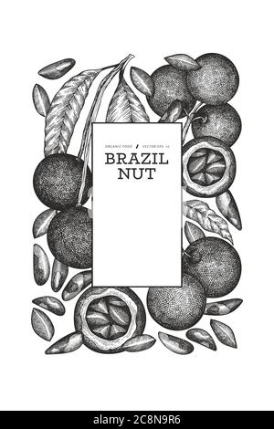 Hand drawn brazilian nut branch and kernels design template. Organic food vector illustration on white background. Vintage nut illustration. Engraved - Stock Photo