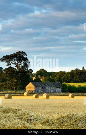 Scenic rural landscape (straw bales in farm field after wheat harvest, sunlight on rustic wooden barn & evening sky) - North Yorkshire, England UK. - Stock Photo