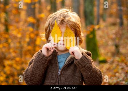 Child covers his eyes with a yellow maple leaf. Autumn kid portrait. Autumn outdoor portrait of beautiful happy child walking in park or forest in