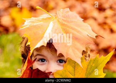 Cute child in beautiful autumn park, concept autumn. Close up portrait. Child covers his eyes with a yellow maple leaf in the autumn park.