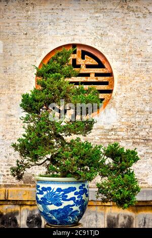 Bonsai in the courtyards of the Imperial city, Hue, Vietnam - Stock Photo