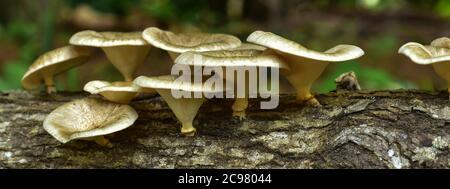 colorful mushroom in reddish,Red mushroom gills texture - Stock Photo