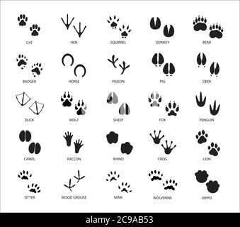 Set of different animals and birds silhouette tracks with description isolated on white background flat vector illustration - Stock Photo
