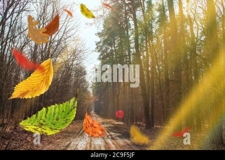 Autumn background with falling color trees foliage. Frame of fallen autumn leaves in the forest. Beautiful colorful autumn fly leaves - Stock Photo