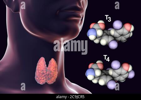 Molecules of thyroid hormones triiodothyronine (T3) and thyroxine (T4), computer illustration. - Stock Photo