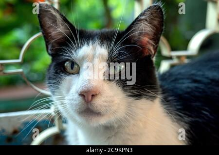 Portrait of black-and-white domestic cat, which is with wide open eyes, who looks. Close-up. Outdoors. Stock Photo