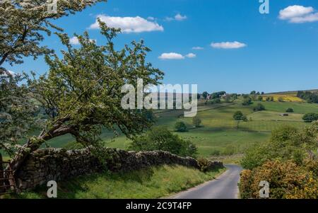 Looking down Trapping Hill in Nidderdale with an old hawthorn tree and across to the village of Middlesmoor, North Yorkshire, England, uk