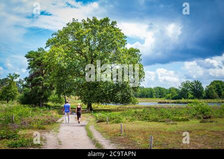 Ciouple walking in National Park Hatertse and Overasseltse Vennen in Overasselt, Gelderland Netherlands, Europe