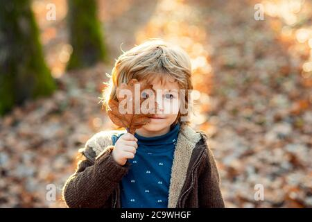 Child covers his eyes with a yellow maple leaf. Kids walking in autumn park. Cute boy playing with maple leaves outdoors. Toddler wears Autumn. Autumn