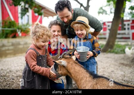 Portrait of family with small children standing on farm, giving water to goat. - Stock Photo