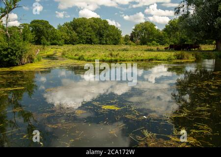 A view of a drainage ditch lloking from Horstead Mill in norfolk overlooking grazing marshland - Stock Photo