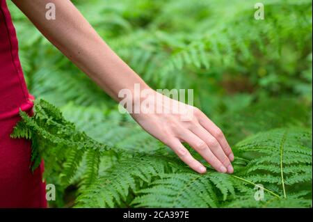 Female hand, with long graceful fingers gently touches the plant, leaves of fern. Close-up shot of unrecognizable person.High quality photo.