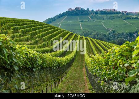 Summer evening sunlight on the green hills of vineyards near Barolo, Piemonte, Italy