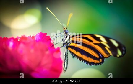 Butterfly, gorgeous butterfly sitting on a leaf, resting, beautiful colors, elegant and delicate creature, the best photo. - Stock Photo