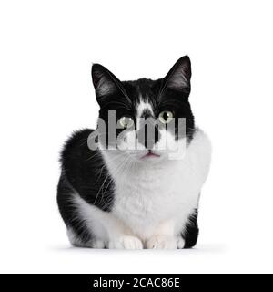 Cute black and white house cat, sitting facing forwards. Looking beside camera with mesmerizing green eyes. Isolated on white background. - Stock Photo