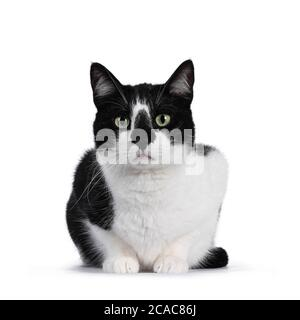 Cute black and white house cat, sitting facing forwards. Looking straight at camera with mesmerizing green eyes. Isolated on white background. - Stock Photo