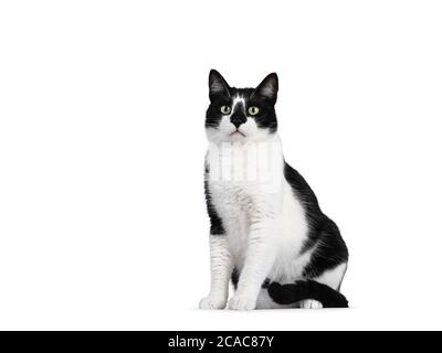 Cute black and white house cat, sitting side ways. Looking beside camera with mesmerizing green eyes. Isolated on white background. - Stock Photo