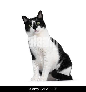 Cute black and white house cat, sitting side ways. Looking at camera with mesmerizing green eyes. Isolated on white background. - Stock Photo