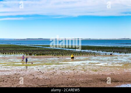 Oyster beds in the sea, Whitstable, Kent, UK - Stock Photo
