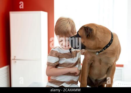 portrait of beautiful dog loving his boy owner, they sit together at table in vet clinic, have fun, friendship, pet and people - Stock Photo