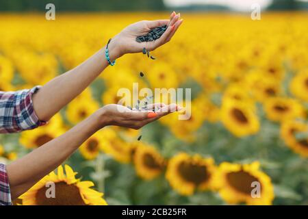 Woman farmer holding sunflower seeds in hands at agricultural field - Stock Photo