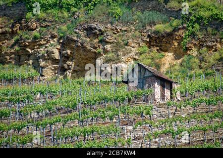 Stuttgart winegrowing - Stock Photo