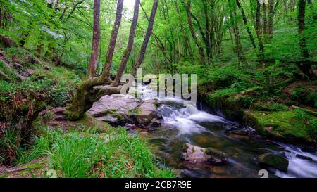 Liskeard, UK - July 15, 2020:  Golitha Falls on the River Fowey on Bodmin Moor, Cornwall, UK - Stock Photo