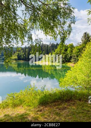 Green forest pretty beautiful preserved nature natural environment Spring season in lake Mrzla vodica in Croatia Europe - Stock Photo