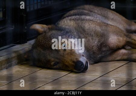 Bored wolf in a cage - Stock Photo
