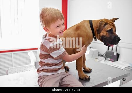 portrait of friendly dog with kid boy, cute boy sit with big pet on table, waiting for medical examining in vet clinic - Stock Photo