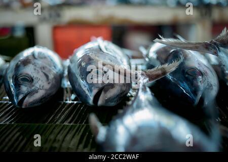 Fresh Tuna Fish sale at Indonesian traditional seafood market