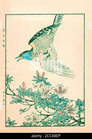 Imao Keinen: Keinen Kacho Gafu (Four Seasons Bird and Flower Albums); Cuckoo and Azalea. Japan. 1892 Imao Keinen (1845 – 1924) was a Japanese painter