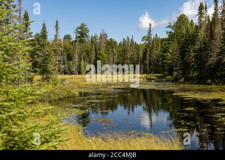 Lake landscape at West Rose Pond in Algonquin Provincial Park