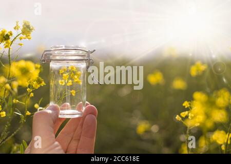 Bottle of rapeseed oil in the hand of an agronomist or biologist on the background of a rapeseed field. - Stock Photo
