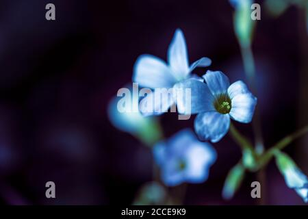 Close Up, Nature, Garden, Flower, Growth, Abstract,