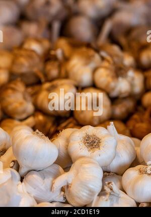 freshly picked garlic bulbs and cloves for sale in wooden traditional crates at the garlic farm at newchurch on the isle of wight - Stock Photo