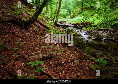 Wooded mountain stream bank. A mountain stream in the forest runs among the sloping banks strewn with fallen leaves.