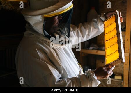 Side view of beekeeper examining honey bee hive frame with cells filled with honey and pollen