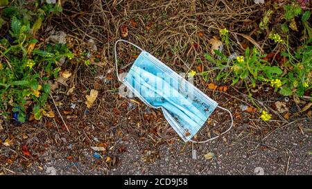 Discarded surgical face masks lying on the ground in a park where dogs walk