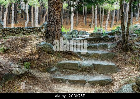 granite stone steps in the middle of a pine forest in the guadarrama national park. Madrid. spain.