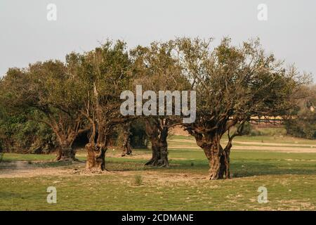 Villa Florida, Paraguay. 9th September, 2007. A general view of twisted and curled trees standing on a riverside along the Tebicuary River on the border of Paraguari and Misiones Department, in the Eastern Region (Region Oriental) of Paraguay. - Stock Photo